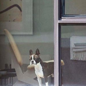 A dog stands at the window of an apartment, looking outwards. Photograph by Arne Svenson (courtesy of Julie Saul Gallery). The dog is not named.